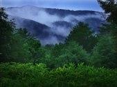 Georgia Mist